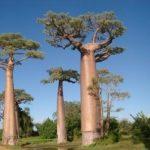 Baobab Mada tripnotes
