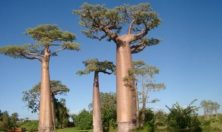 Madagascar, Morondava