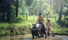 Cambogia rural