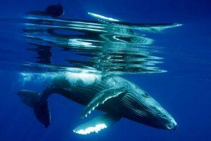 Baja California balene laguna San Ignacio