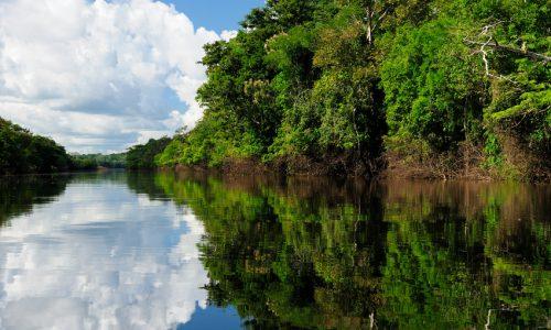 Brasile Amazon