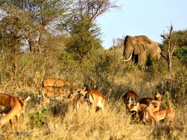 Viaggi di nozze tanzania elephant