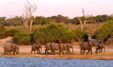 Botswana elefanti